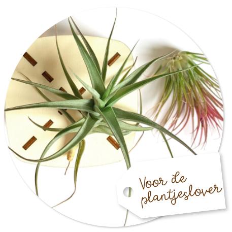 voor de plantjeslover kadootjes voor plantenliefhebbers
